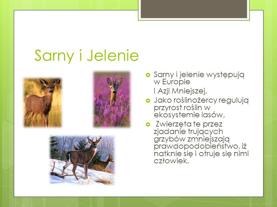 Sarny i Jelenie Sarny i jelenie występują w Europie i Azji Mniejszej,