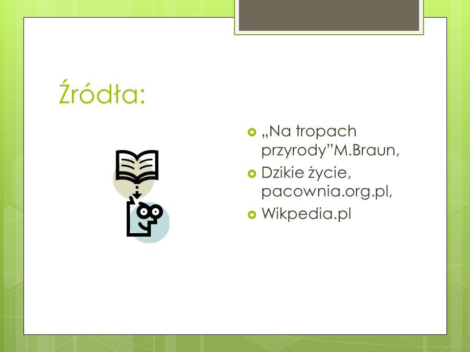 """Źródła: """"Na tropach przyrody M.Braun, Dzikie życie, pacownia.org.pl,"""
