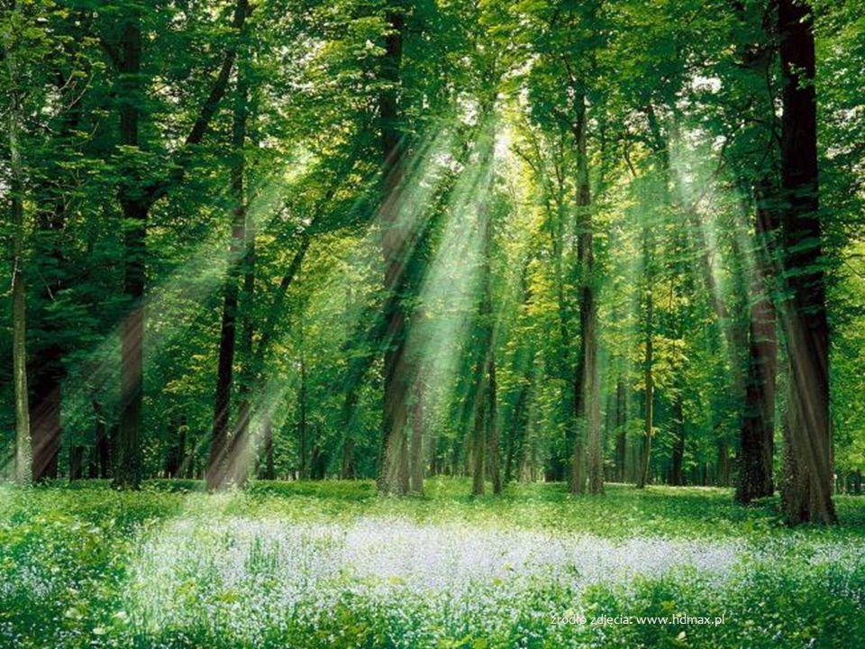 źródło zdjęcia: www.hdmax.pl