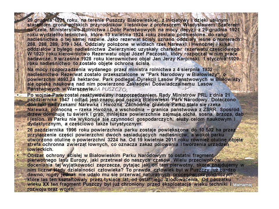 29 grudnia 1921 roku, na terenie Puszczy Białowieskiej, z inicjatywy i dzięki usilnym staraniom grona polskich przyrodników i leśników z profesorem Władysławem Szaferem na czele, Ministerstwo Rolnictwa i Dóbr Państwowych na mocy decyzji z 29 grudnia 1921 roku wydzieliło leśnictwo, które 13 kwietnia 1924 roku zostało podniesione do rangi nadleśnictwa o tej samej nazwie. Jako rezerwat ścisły uznano oddziały leśne o numerach: 258, 288, 289, 319 i 344. Oddziały położone w widłach rzek Narewki i Hwnoźnej i kilka oddziałów z byłego nadleśnictwa Zwierzyniec uzyskały charakter rezerwatu częściowego. W 1923 roku kierownictwo Rezerwatu objął Józef Paczoski, który rozpoczął w nim prace badawcze. 9 września 1928 roku kierownictwo objął Jan Jerzy Karpiński. 1 stycznia 1929 roku nadleśnictwo to zostało objęte ochroną ścisłą.