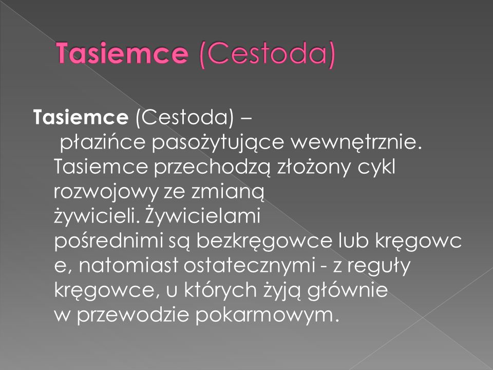 Tasiemce (Cestoda)