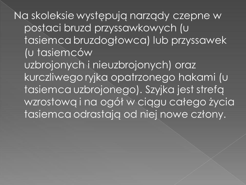 Na skoleksie występują narządy czepne w postaci bruzd przyssawkowych (u tasiemca bruzdogłowca) lub przyssawek (u tasiemców uzbrojonych i nieuzbrojonych) oraz kurczliwego ryjka opatrzonego hakami (u tasiemca uzbrojonego).