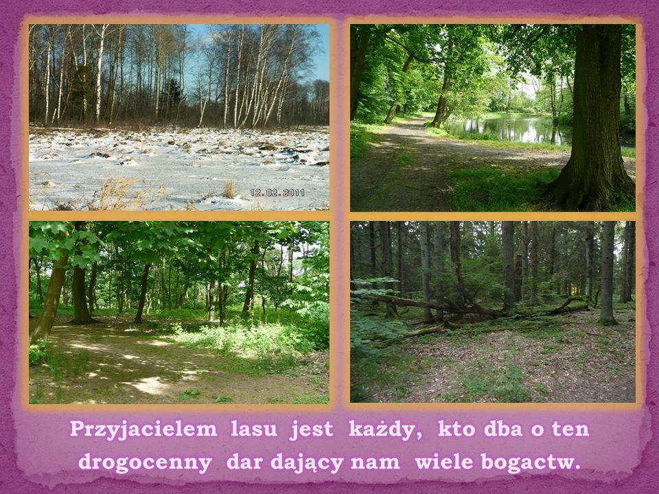 Przyjacielem lasu jest każdy, kto dba o ten drogocenny dar dający nam wiele bogactw.