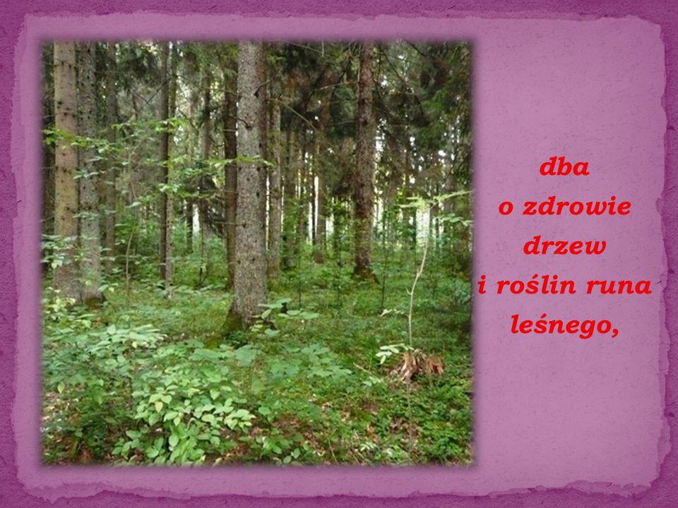 dba o zdrowie drzew i roślin runa leśnego,
