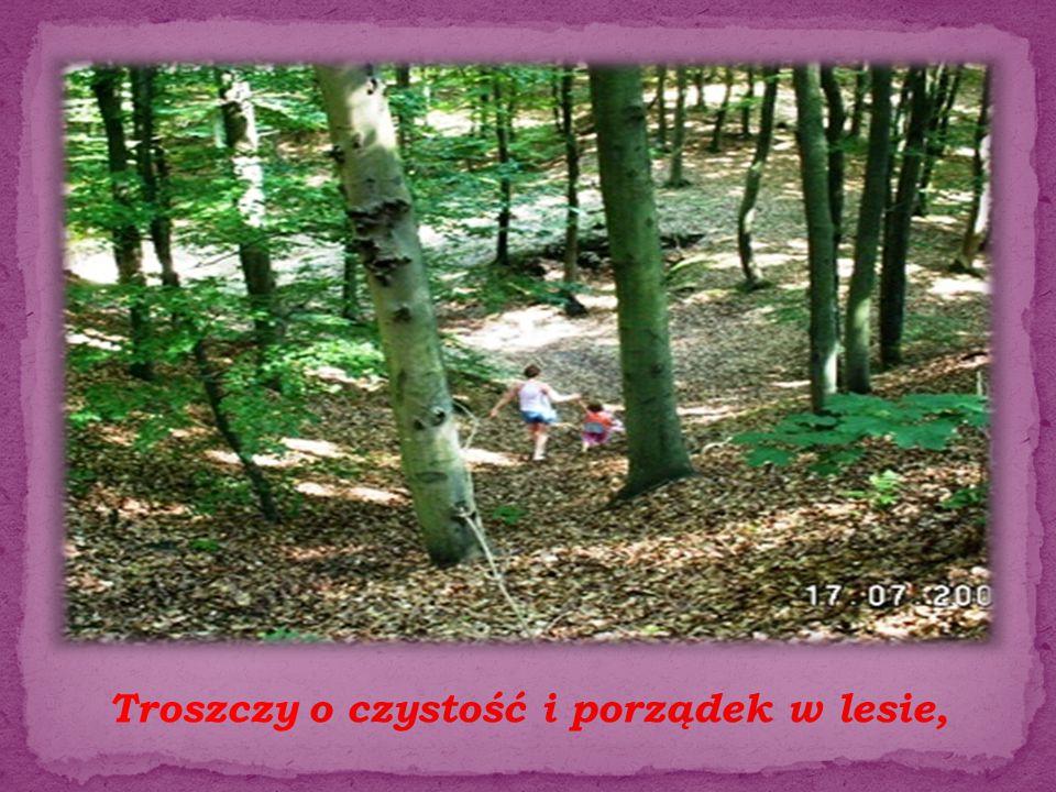 Troszczy o czystość i porządek w lesie,