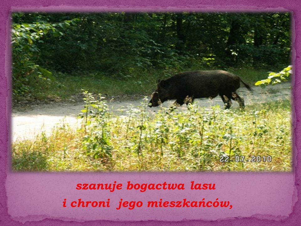 szanuje bogactwa lasu i chroni jego mieszkańców,