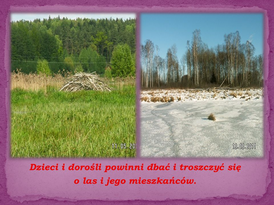 Dzieci i dorośli powinni dbać i troszczyć się o las i jego mieszkańców.