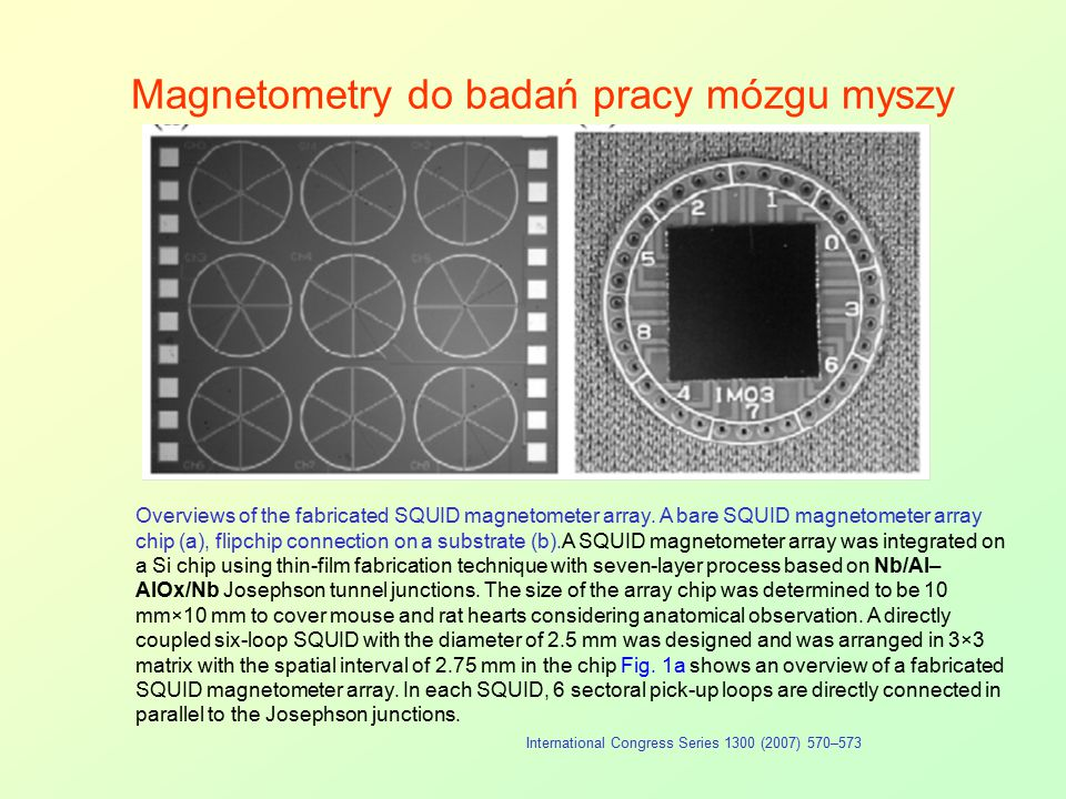 Magnetometry do badań pracy mózgu myszy