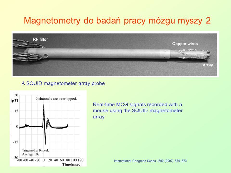 Magnetometry do badań pracy mózgu myszy 2