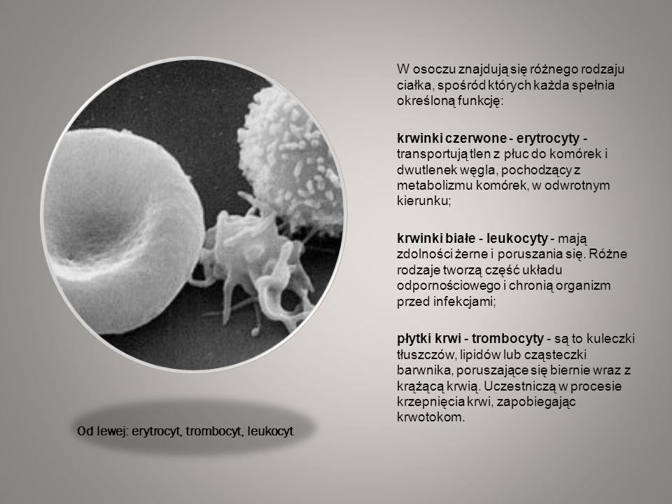Od lewej: erytrocyt, trombocyt, leukocyt.
