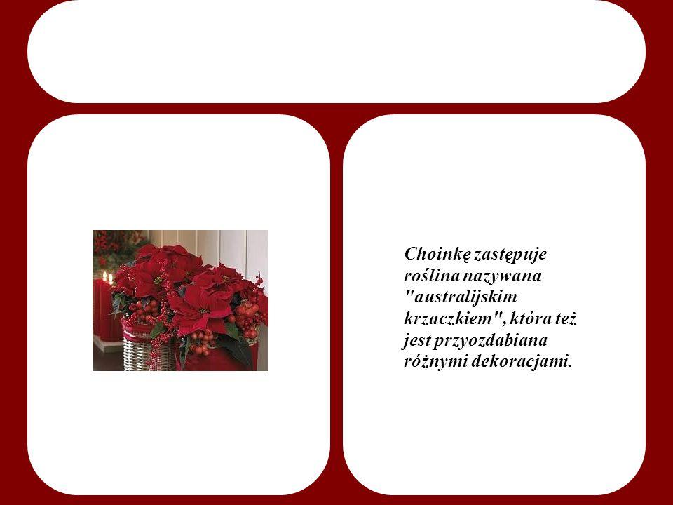 Choinkę zastępuje roślina nazywana australijskim krzaczkiem , która też jest przyozdabiana różnymi dekoracjami.