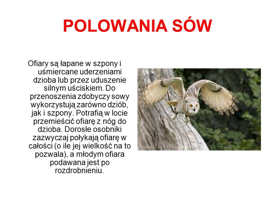 POLOWANIA SÓW
