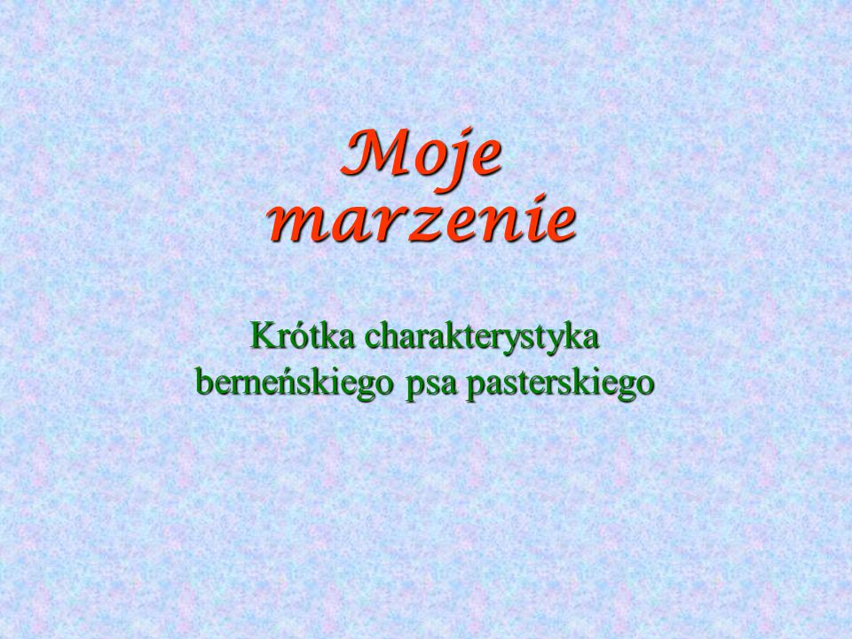 Krótka charakterystyka berneńskiego psa pasterskiego