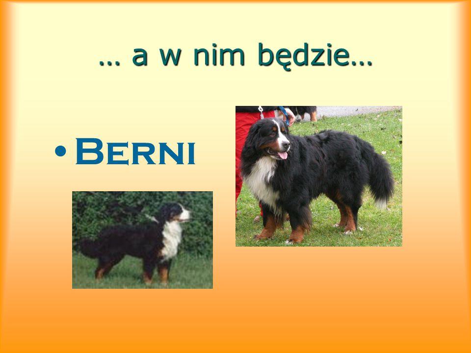 … a w nim będzie… Berni