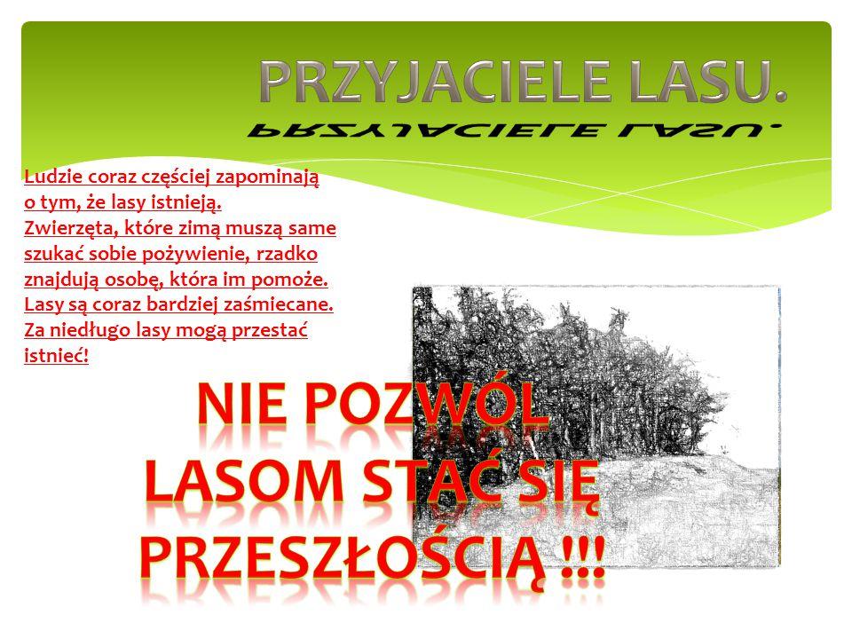 Nie pozwól lasom stać się przeszłością !!!