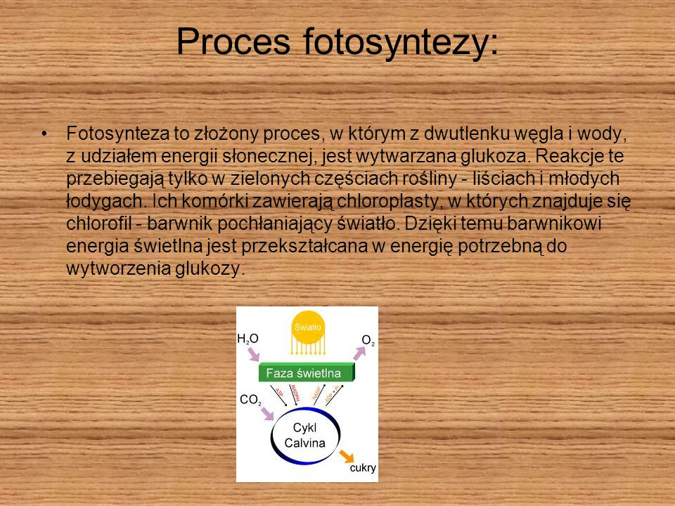 Proces fotosyntezy: