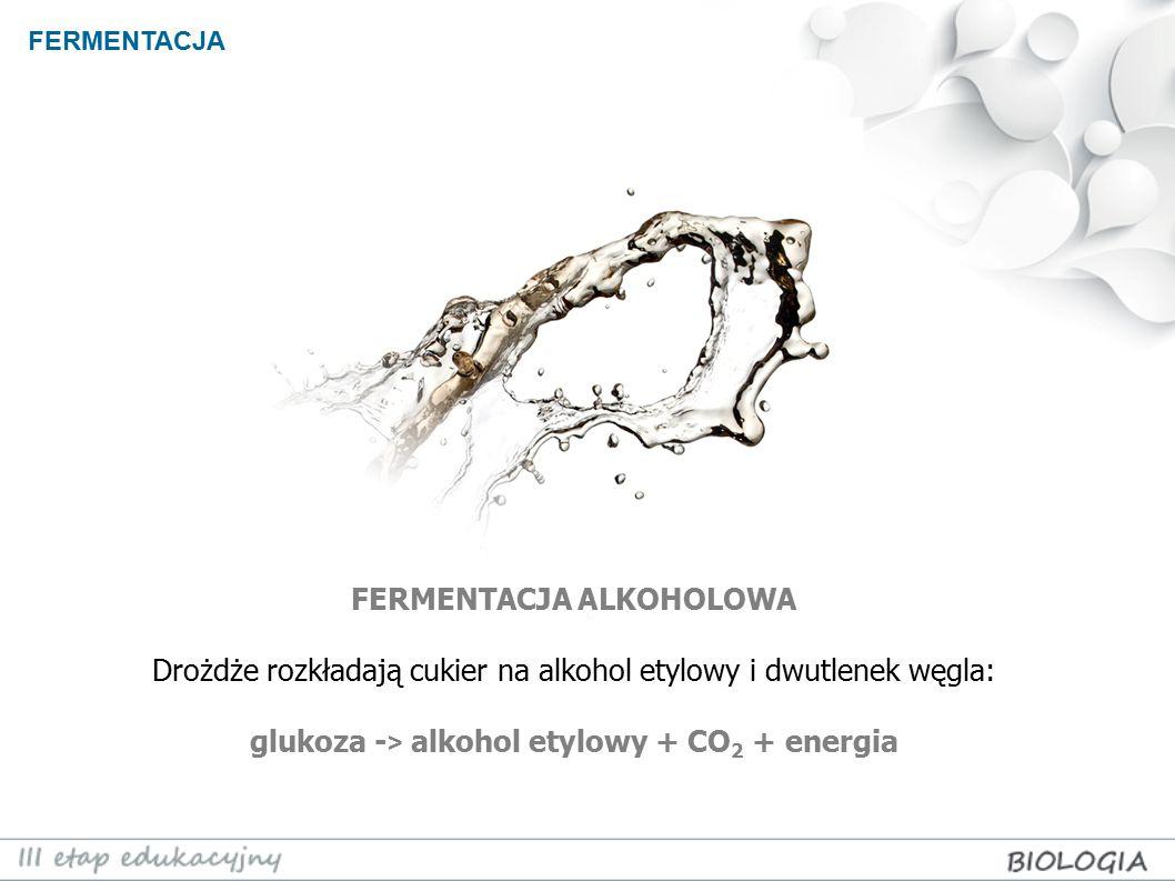 FERMENTACJA ALKOHOLOWA glukoza -> alkohol etylowy + CO2 + energia
