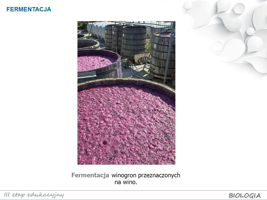 Fermentacja winogron przeznaczonych na wino.