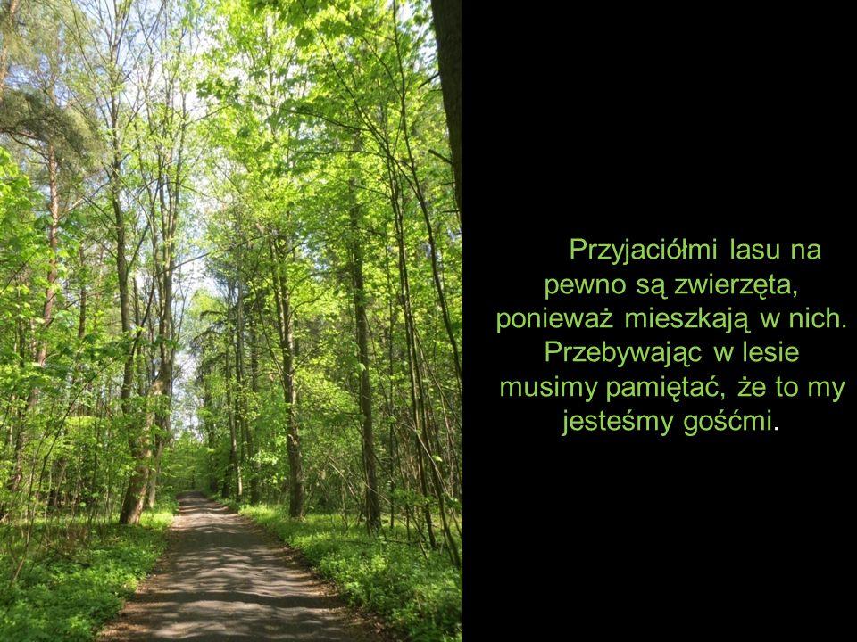 Przyjaciółmi lasu na pewno są zwierzęta, ponieważ mieszkają w nich
