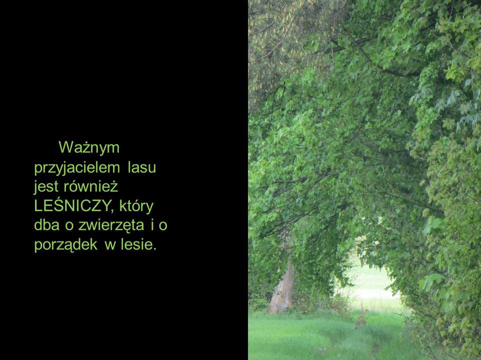 Ważnym przyjacielem lasu jest również LEŚNICZY, który dba o zwierzęta i o porządek w lesie.