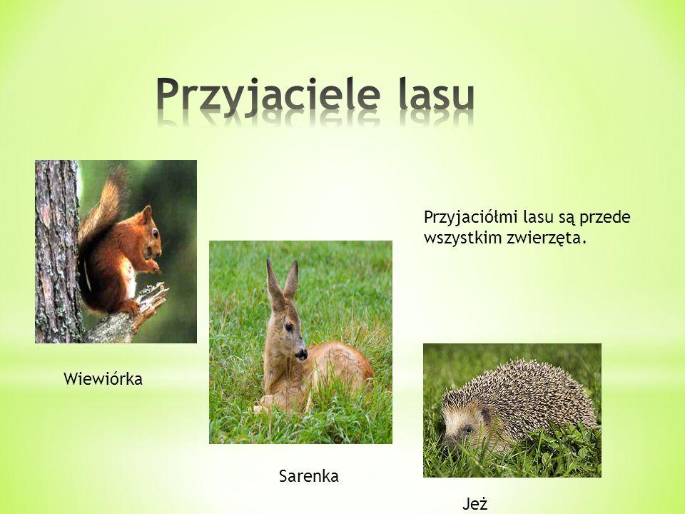 Przyjaciele lasu Przyjaciółmi lasu są przede wszystkim zwierzęta.