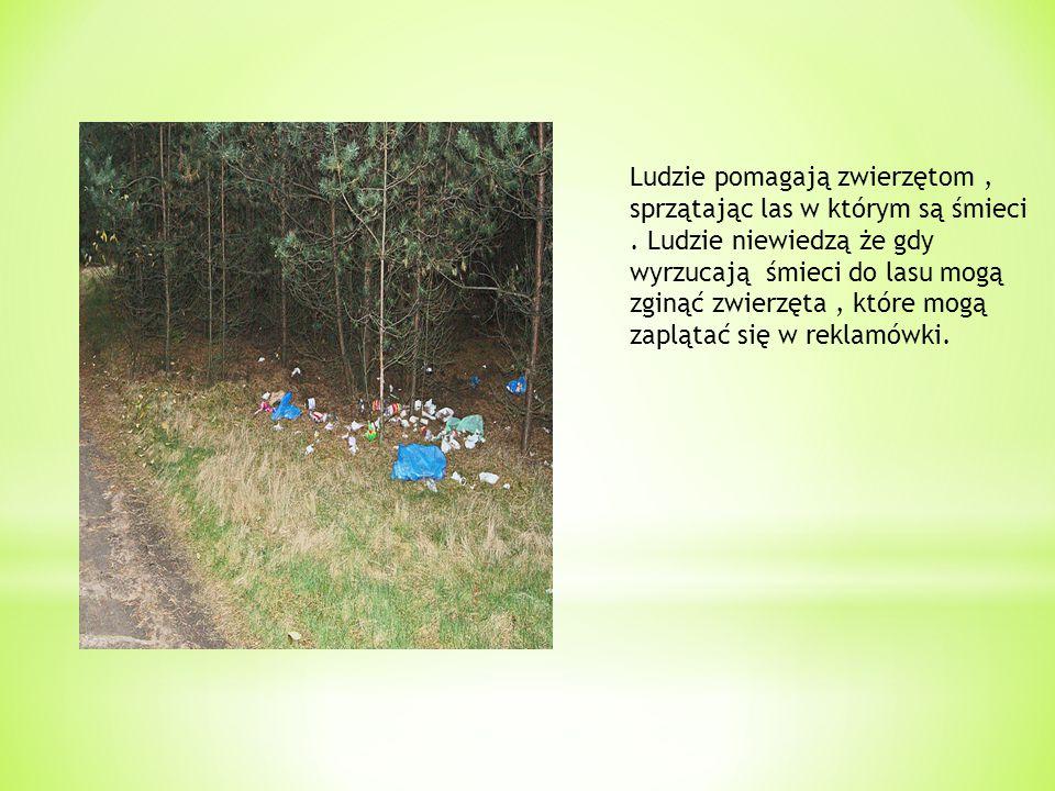 Ludzie pomagają zwierzętom , sprzątając las w którym są śmieci