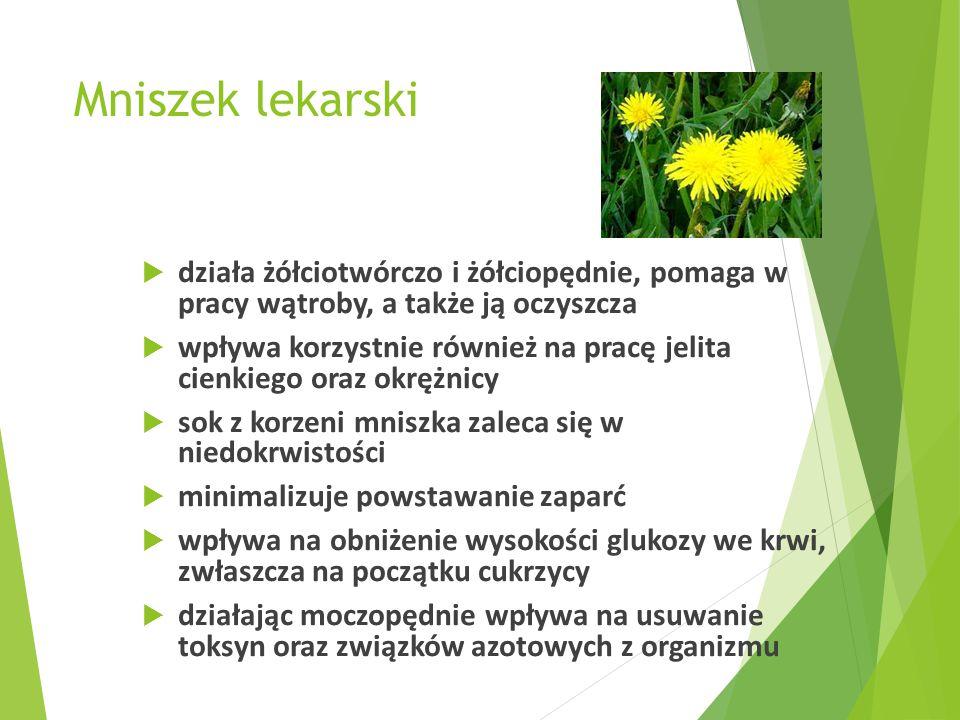 Mniszek lekarski działa żółciotwórczo i żółciopędnie, pomaga w pracy wątroby, a także ją oczyszcza.