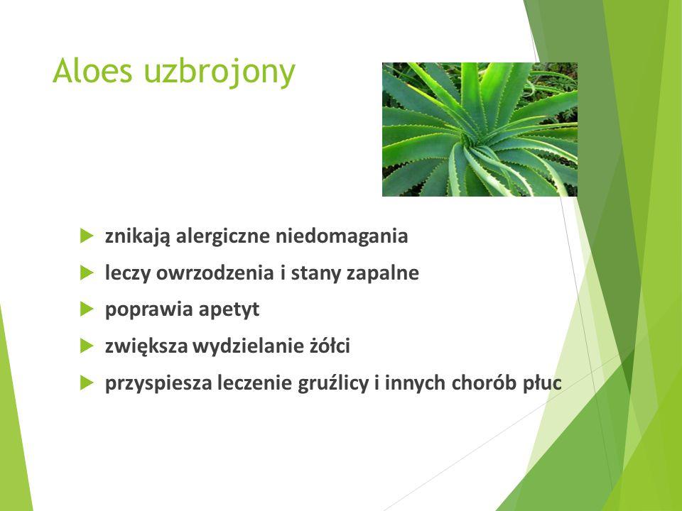 Aloes uzbrojony znikają alergiczne niedomagania