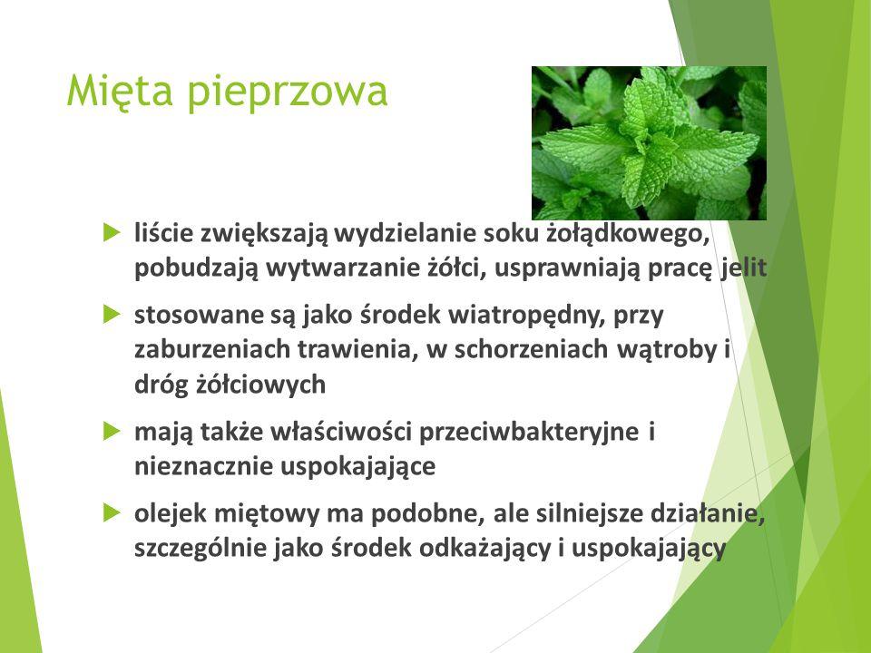Mięta pieprzowa liście zwiększają wydzielanie soku żołądkowego, pobudzają wytwarzanie żółci, usprawniają pracę jelit.