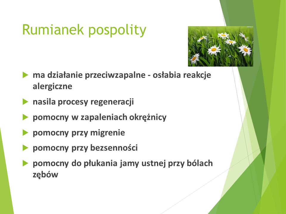 Rumianek pospolity ma działanie przeciwzapalne - osłabia reakcje alergiczne. nasila procesy regeneracji.