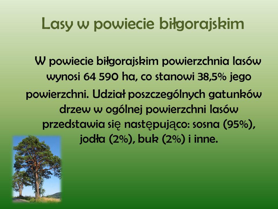 Lasy w powiecie biłgorajskim