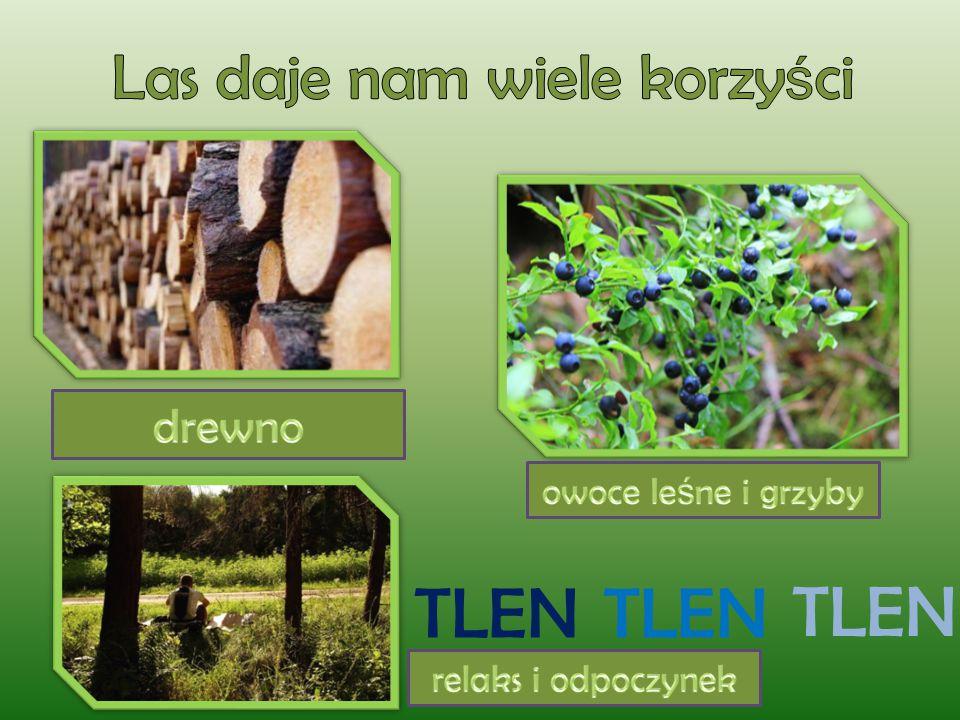 Las daje nam wiele korzyści