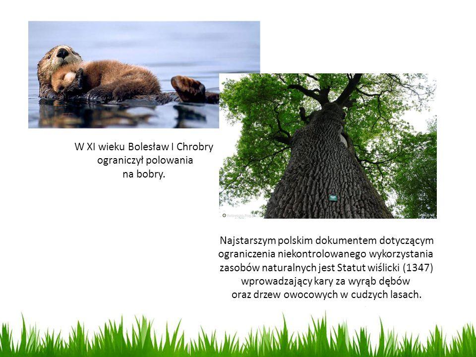 W XI wieku Bolesław I Chrobry ograniczył polowania na bobry.