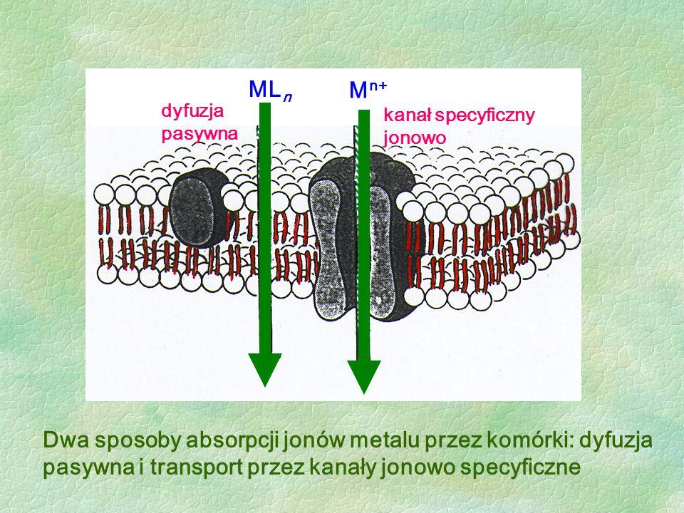 Dwa sposoby absorpcji jonów metalu przez komórki: dyfuzja pasywna i transport przez kanały jonowo specyficzne