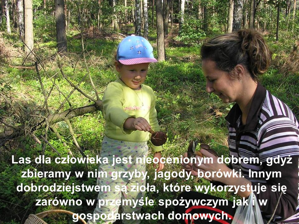 Las dla człowieka jest nieocenionym dobrem, gdyż zbieramy w nim grzyby, jagody, borówki.