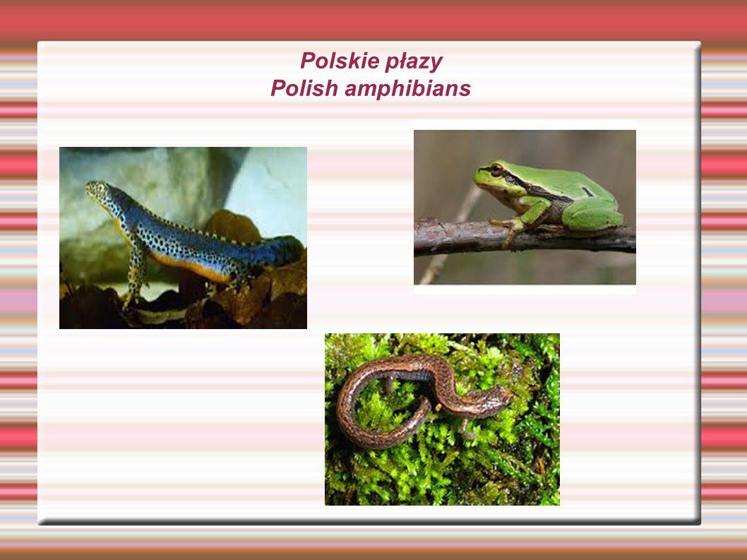Polskie płazy Polish amphibians