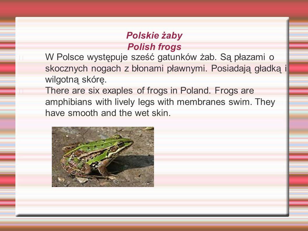Polskie żaby Polish frogs