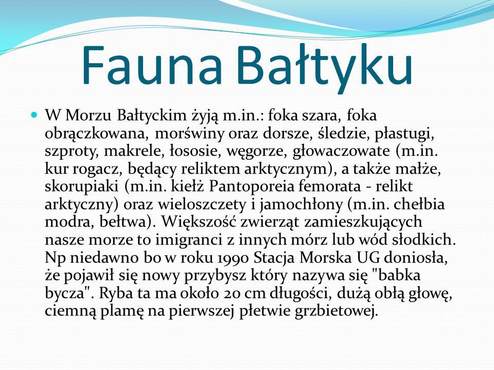 Fauna Bałtyku