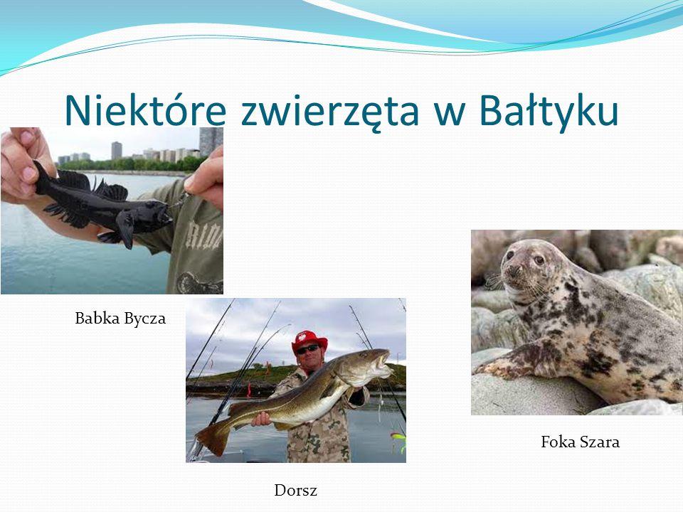 Niektóre zwierzęta w Bałtyku