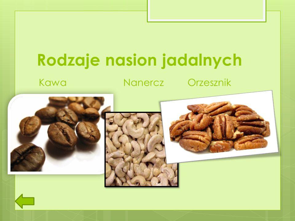 Rodzaje nasion jadalnych
