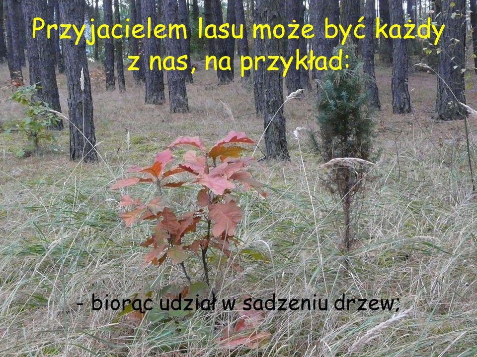 Przyjacielem lasu może być każdy z nas, na przykład: