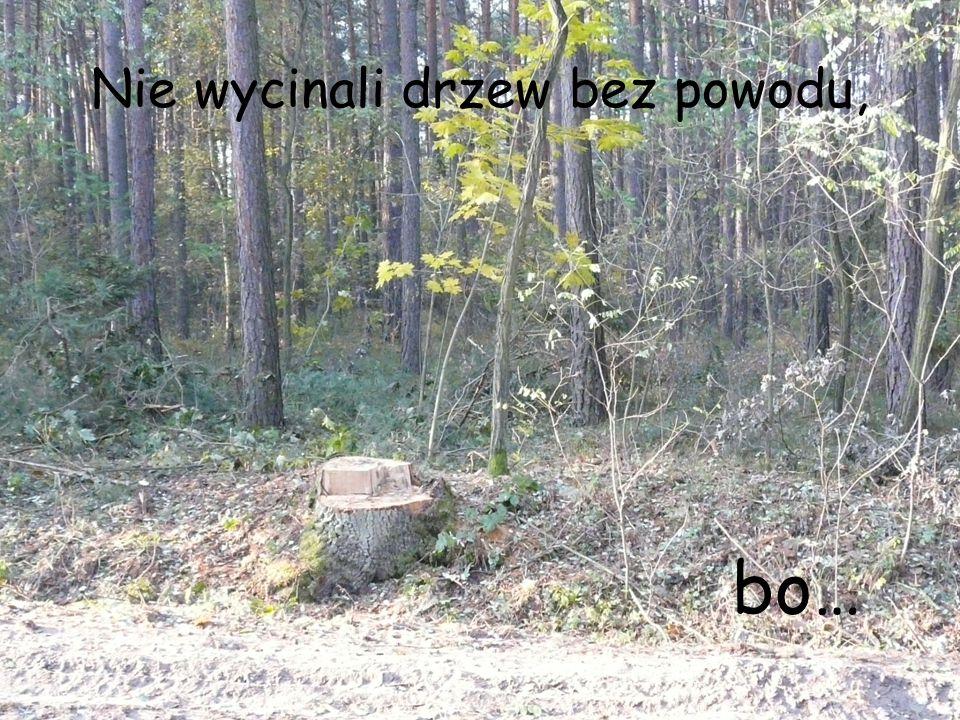 Nie wycinali drzew bez powodu,