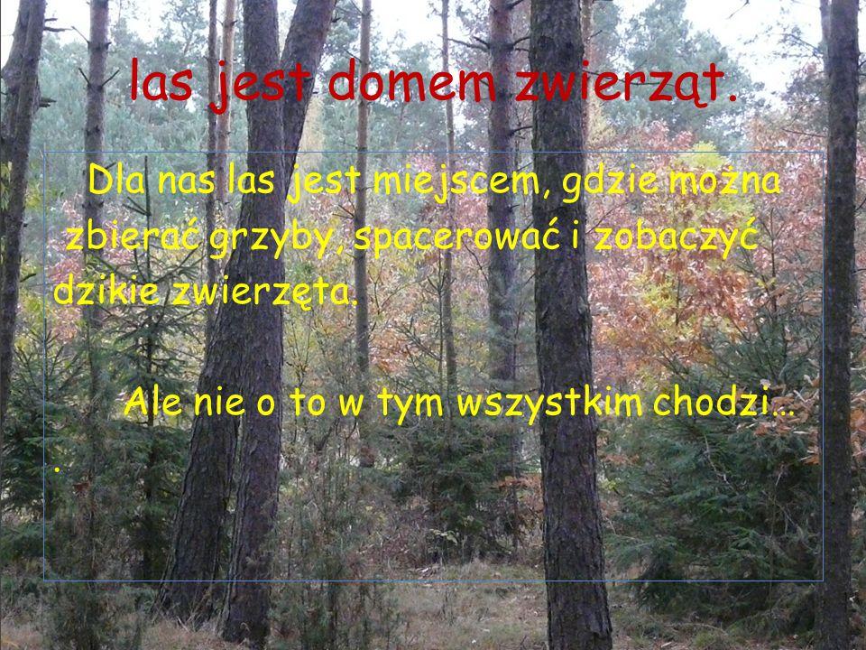 las jest domem zwierząt.