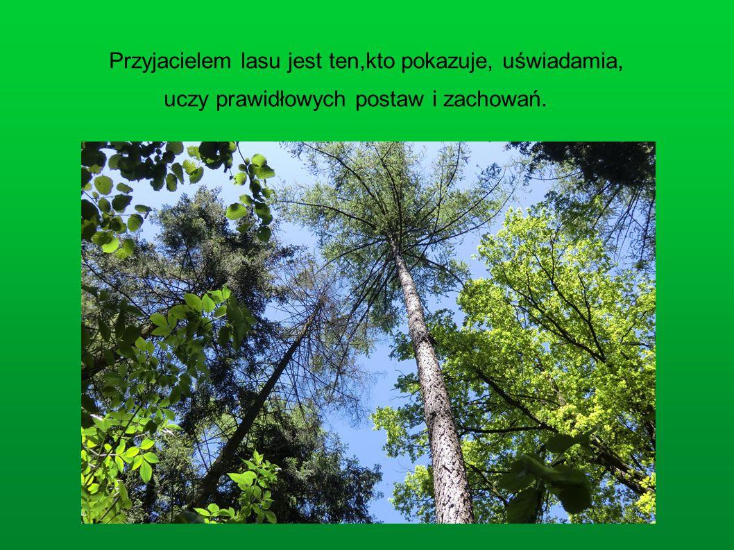 Przyjacielem lasu jest ten,kto pokazuje, uświadamia,