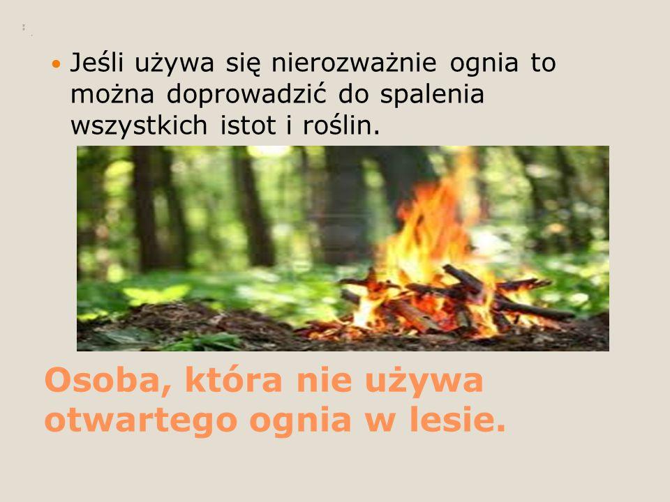 Osoba, która nie używa otwartego ognia w lesie.
