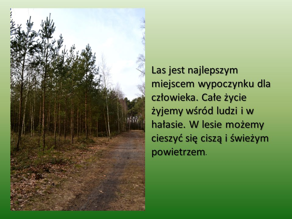 Las jest najlepszym miejscem wypoczynku dla człowieka