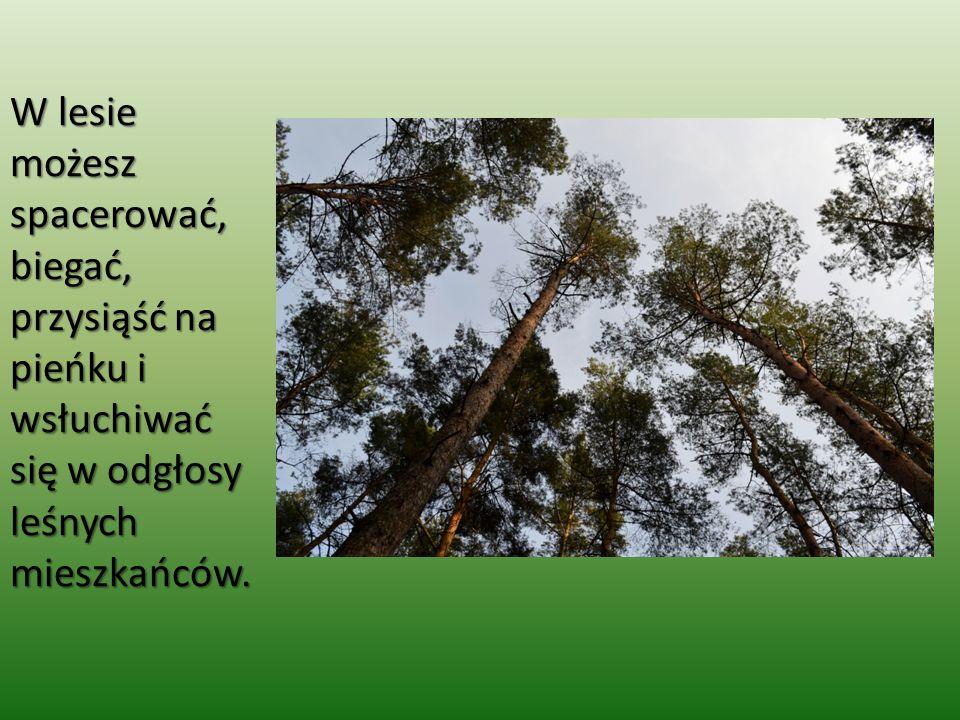 W lesie możesz spacerować, biegać, przysiąść na pieńku i wsłuchiwać się w odgłosy leśnych mieszkańców.
