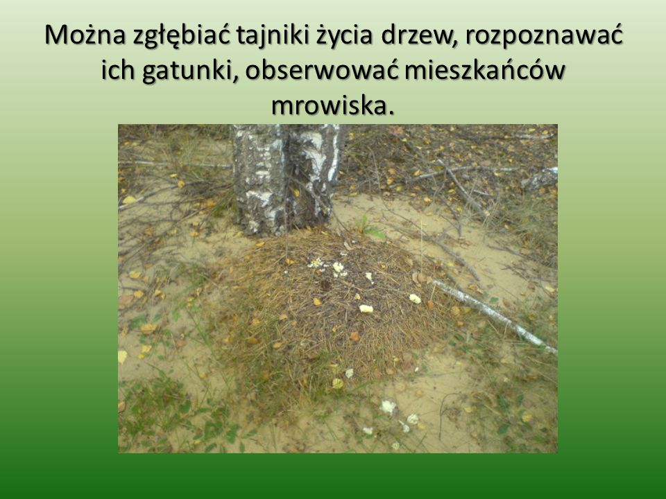 Można zgłębiać tajniki życia drzew, rozpoznawać ich gatunki, obserwować mieszkańców mrowiska.