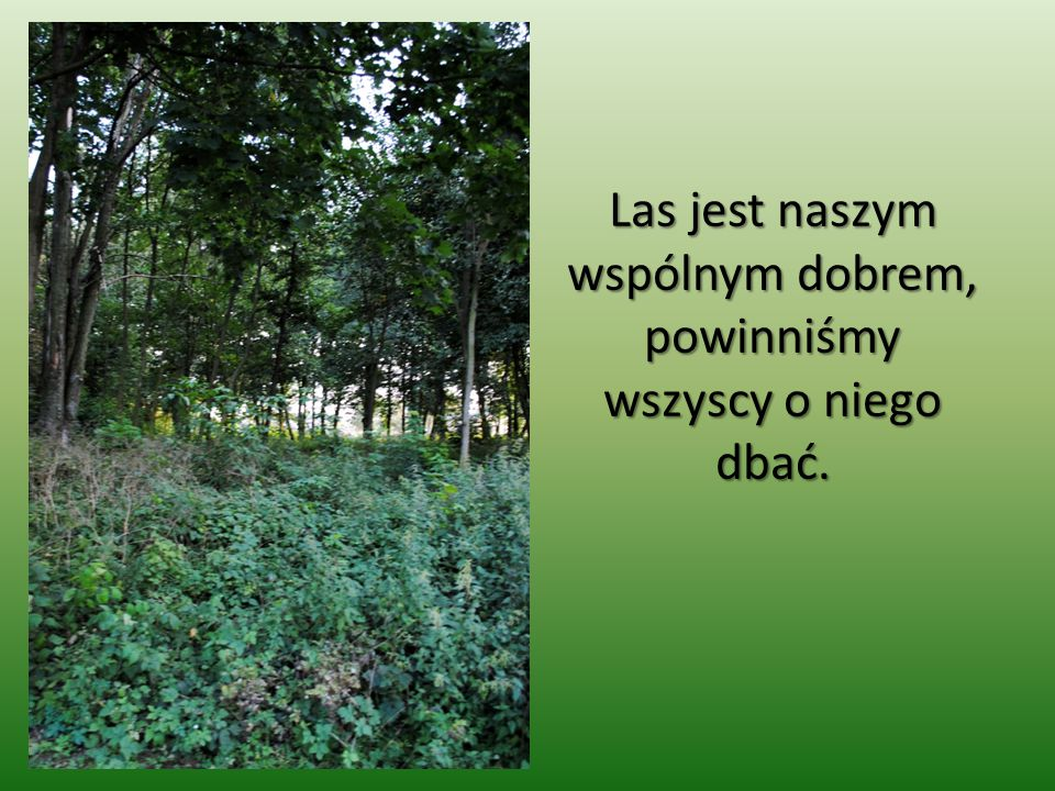 Las jest naszym wspólnym dobrem, powinniśmy wszyscy o niego dbać.