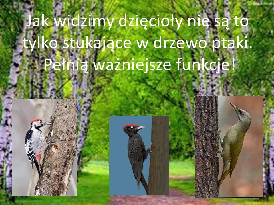 Jak widzimy dzięcioły nie są to tylko stukające w drzewo ptaki.